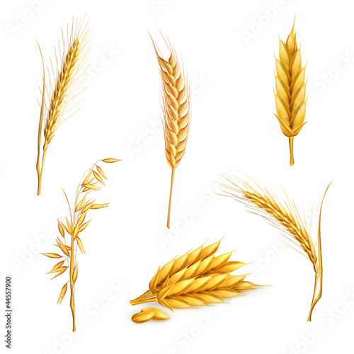 Wheat, set - 44557900