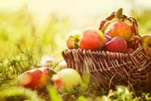 Bio-Äpfel im Sommer Gras