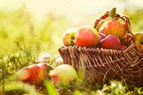 Organicznie jabłka w lato trawie