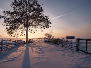 Winter landscape in pasture at sunset, Kinderdijk Netherlands