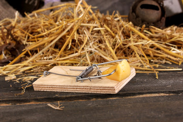 Mousetrap with a piece of cheese close-up in barn
