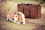 Dog with Sunglasses and Old Fashioned Suitcase