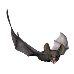 3D Render of a Bat