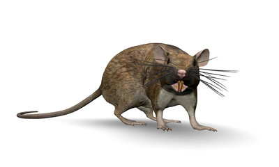 3D Render of a Fat Rat