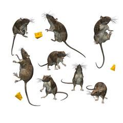 8 Rats in Different Poses