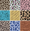 animal skin pattern set