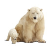 polar bear with baby. Isolated over white