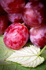 uva rossa - close up