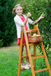 Autumn orchard - lovely girl picking  ripe  pears