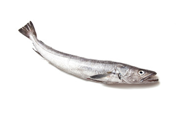 European Hake fish isolated on a white background.