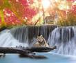 Fototapeten,tiger,natur,paradise,landschaft