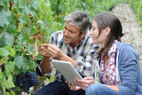 Winemakers in cellar using electronic tablet - Fine Art prints