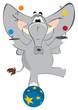 Elephant juggler