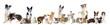 groupe de chiens et chats de race