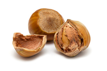 hazelnut close up