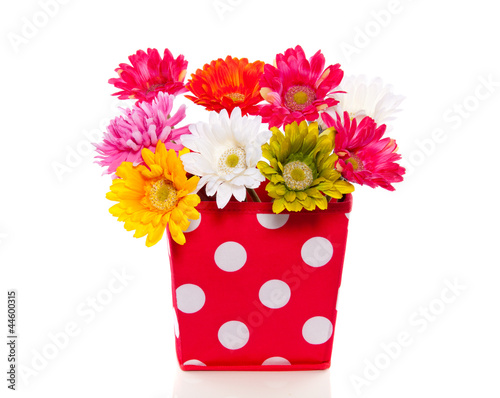 A polkadot red vase with silk gerber flowers isolated over white
