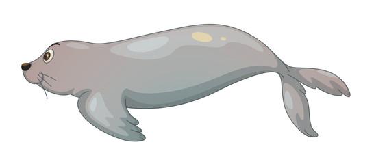 seal fish