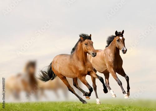konie-w-zachodzie-slonca