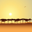 A Line of Trees in Silhouette with Sunset, Sunrise