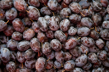 Heap Of Fresh Organic Purple  Damson Plums