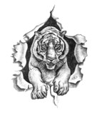Pencil drawing of a tiger - 44616754