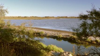 landscape of camargue