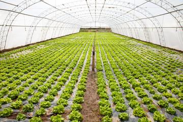 cultivo en un invernadero