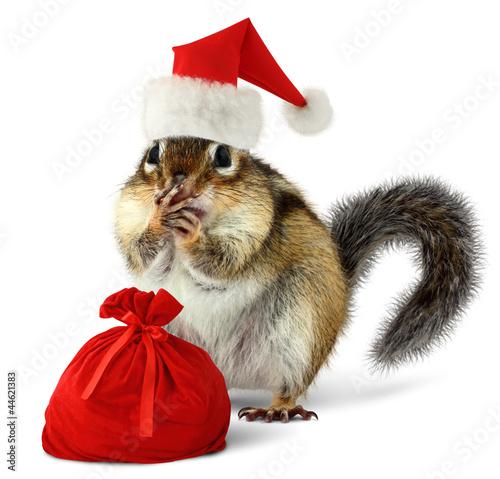 Foto op Canvas Eekhoorn Chipmunk in red Santa Claus hat with Santas bag