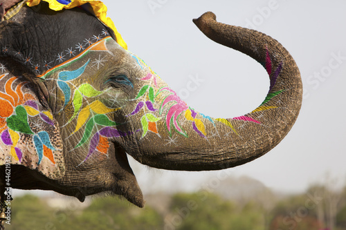 Fotobehang India Decorated elephant at the elephant festival in Jaipur