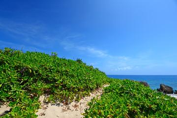 青い空と亜熱帯植物