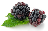 Ripe fresh blackberry