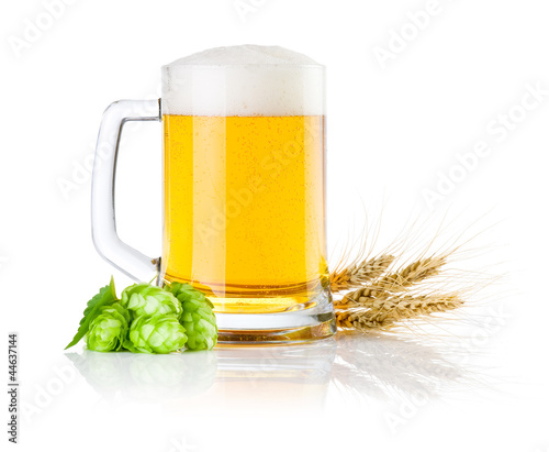 Mug fresh beer with Green hops and ears of barley isolated on a
