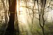 Fototapeten,wald,herbst,foliage,dunst