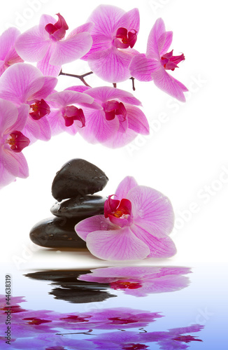 Masaż kamieniami z Orchid