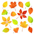 Autumn Leaves. Vector Illustra...