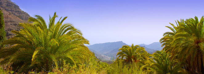 Gran Canaria Canary Palm tree mountains