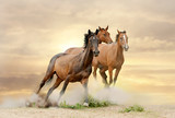 Fototapeta kasztanowe - chmury - Zwierzę Hodowlane