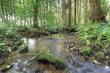 ruisseau en forêt