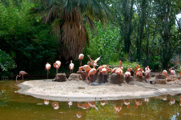 Flock of flamingos on an island.