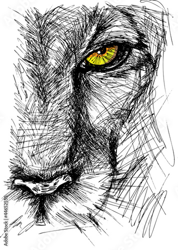 Wall mural Hand drawn Sketch of a lion looking intently at the camera