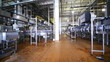bottles milk move wide conveyor, panorama
