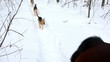 Three dogs run behind horse at winter day