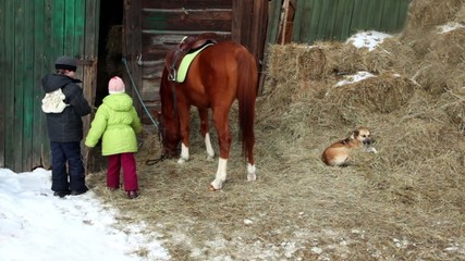 Boy feed horse, sister give hay to horse, dog lies on haystack