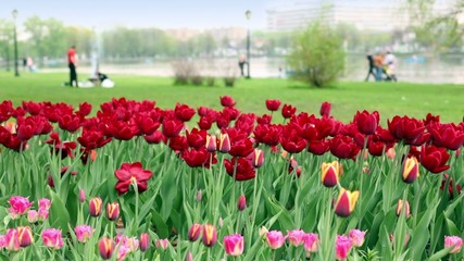 People walk near pond in city, focus is on flowerbed