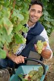 portrait of a wine-grower