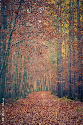 Panel Szklany Pathway in autumn park