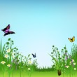 Flowering Meadow and Butterflies