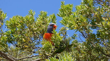 Australiens bunte Vogelwelt