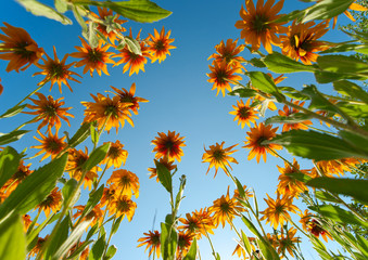 Yellow flowers over blue sky background