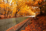 Fototapety Autumn landscape with road and beautiful colored trees
